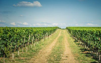 Come diventare imprenditore agricolo: requisiti e consigli pratici